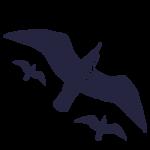 Luis Etty Seagulls